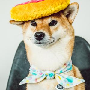 La petite mascotte de Pawsitive pet, spécialiste de l'enrichissement canin avec un jouet donut et un foulard